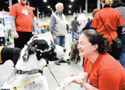 Cara Mitchell of the Mid-Atlantic Great Dane Rescue League plays with Paisley on Feb. 10 during the Super Pet Expo, held last weekend at the New Jersey Convention and Expo Center in Edison. Story, more photos, page 8.  ERIC SUCAR staff
