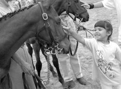 FARRAH  MAFFAI Allentown resident Michele Macfarlan, 5, pets Cecil, a 4-month old thoroughbred, before he enters the ring at the Festival of Horses held Sunday at the Horse Park of New Jersey in Upper Freehold