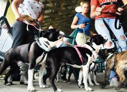 Dogs wait with their owners to audition for Dawn Wolfe, an animal talent scout, during the Jersey Fresh at the Horse Park of New Jersey on May 15.  SCOTT FRIEDMAN