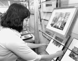 CHRIS KELLY staff Medy Quiroz prepares the photos for her exhibit at the Red Bank Library, Front Street. The show will run until July 22.
