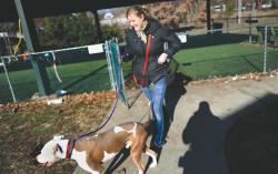 Assistant Manager Melissa Torres leads a pit bull named Friday inside after getting some exercise in the outdoor area at the Monmouth County SPCA in Eatontown on Dec. 14.  STAFF PHOTOGRAPHER ERIC SUCAR
