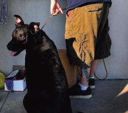Pet owners should prepare a general emergency kit that includes gauze pads, antiseptic wipes, hydrogen peroxide, scissors, tweezers, a blanket, food and water in case a situation such as a hurricane or fire occurs.  FILE PHOTO