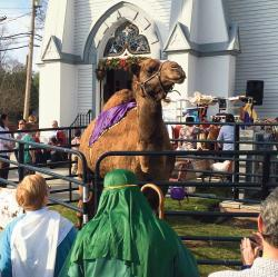 A 1,200-pound camel named Joseph attracted the attention of visitors to a living Nativity scene at the First Baptist Church of Freehold on Dec. 13. A donkey, sheep and goats were also participants in the holiday event.